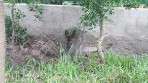 Xem Kangaroo và sếu Nhật Bản tại Thảo cầm viên Sài Gòn - ảnh 3