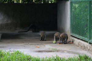 Xem Kangaroo và sếu Nhật Bản tại Thảo cầm viên Sài Gòn - ảnh 1